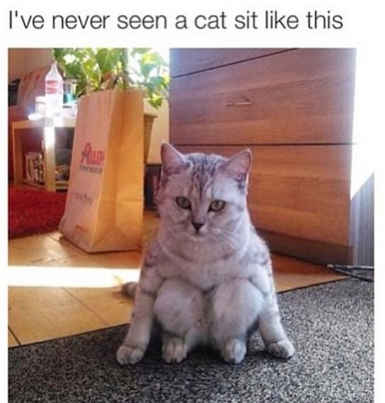 I've never seen a cat sit like this!