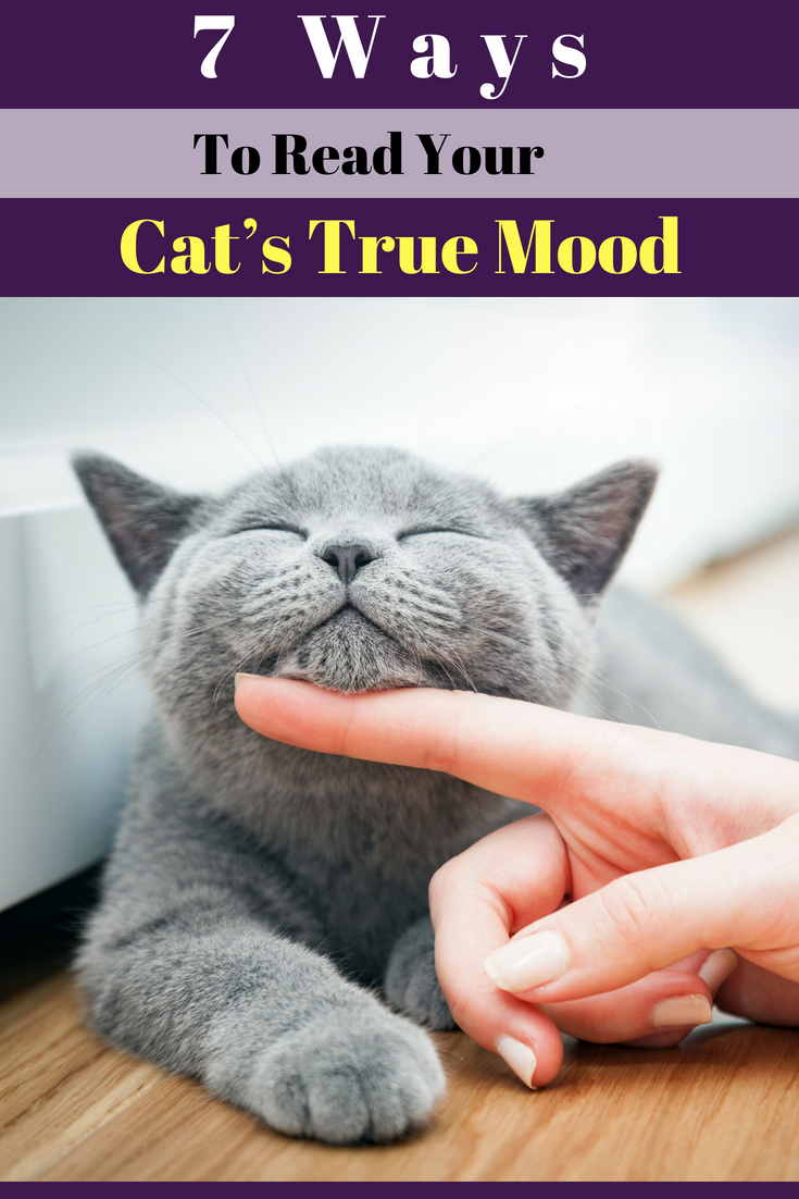 How to Figure Out Your Cats Mood How to Figure Out Your Cats Mood new foto