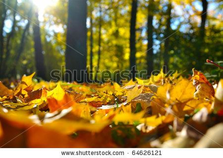 stock photo : macro photo of a fallen leaves in autumn forest