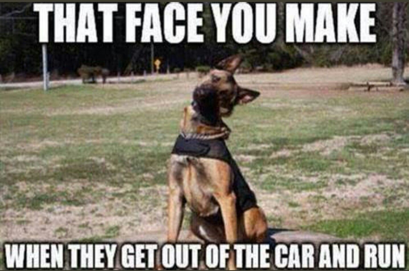 Pin by Calvin Shaw on Police Service Funny dogs