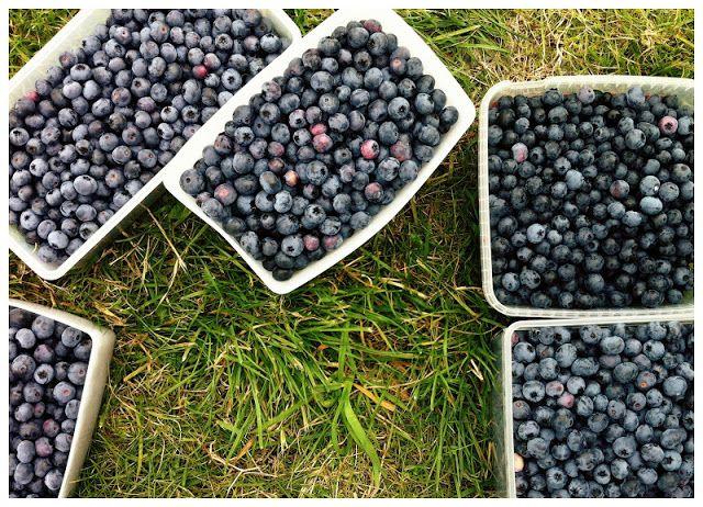 helt og aldeles: Et blåbær-paradis!
