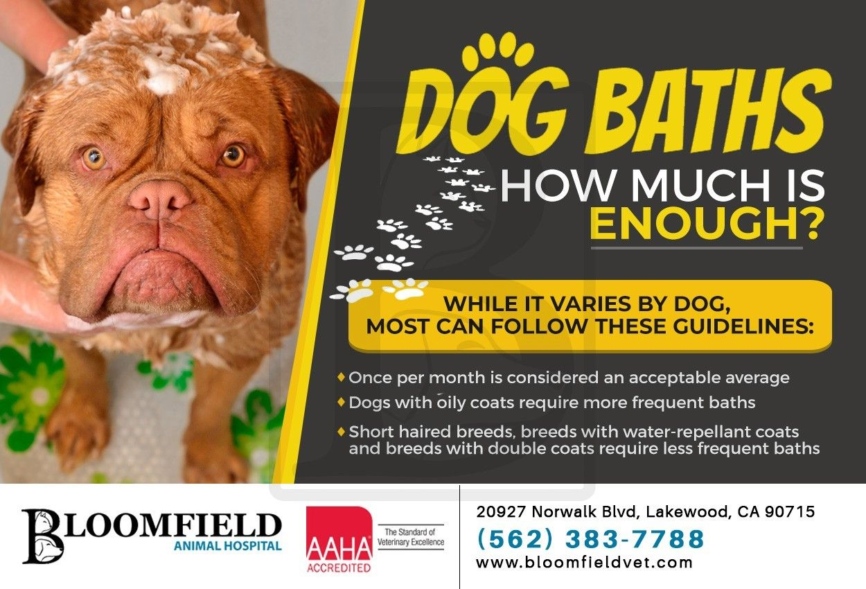 It's best to avoid over bathing your dog and make sure to