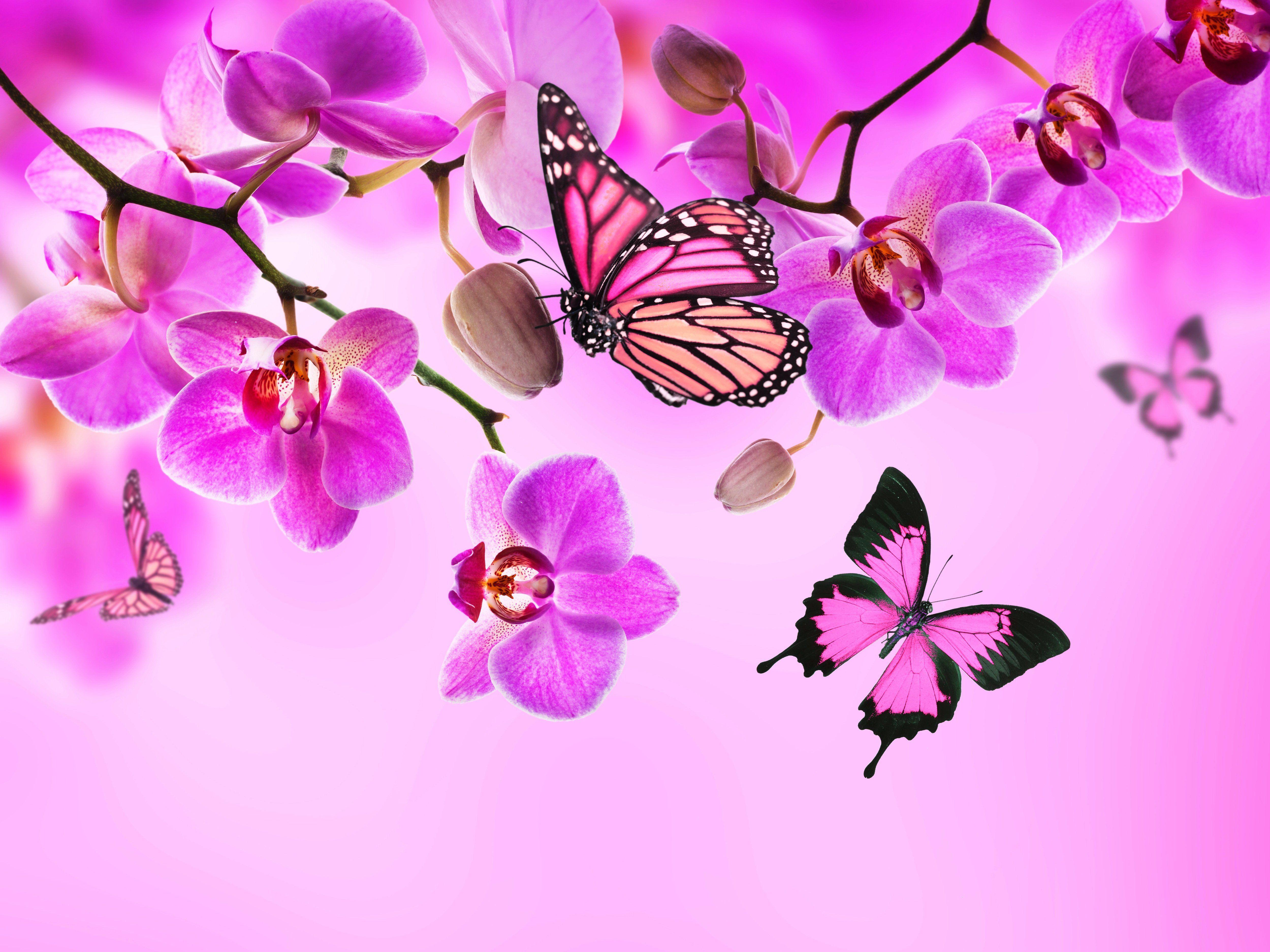 Brustkrebs btterfly crossstitch