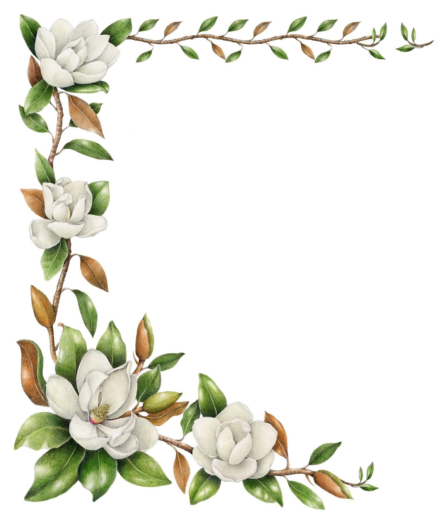 Southern Magnolia Magnolia Grandiflora With Images Botanical Illustration Flower Drawing Botanical Flowers