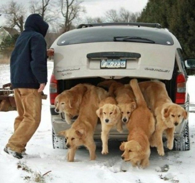Jennifer Craig S Photo Of The Harborview Goldens From Erie Pa