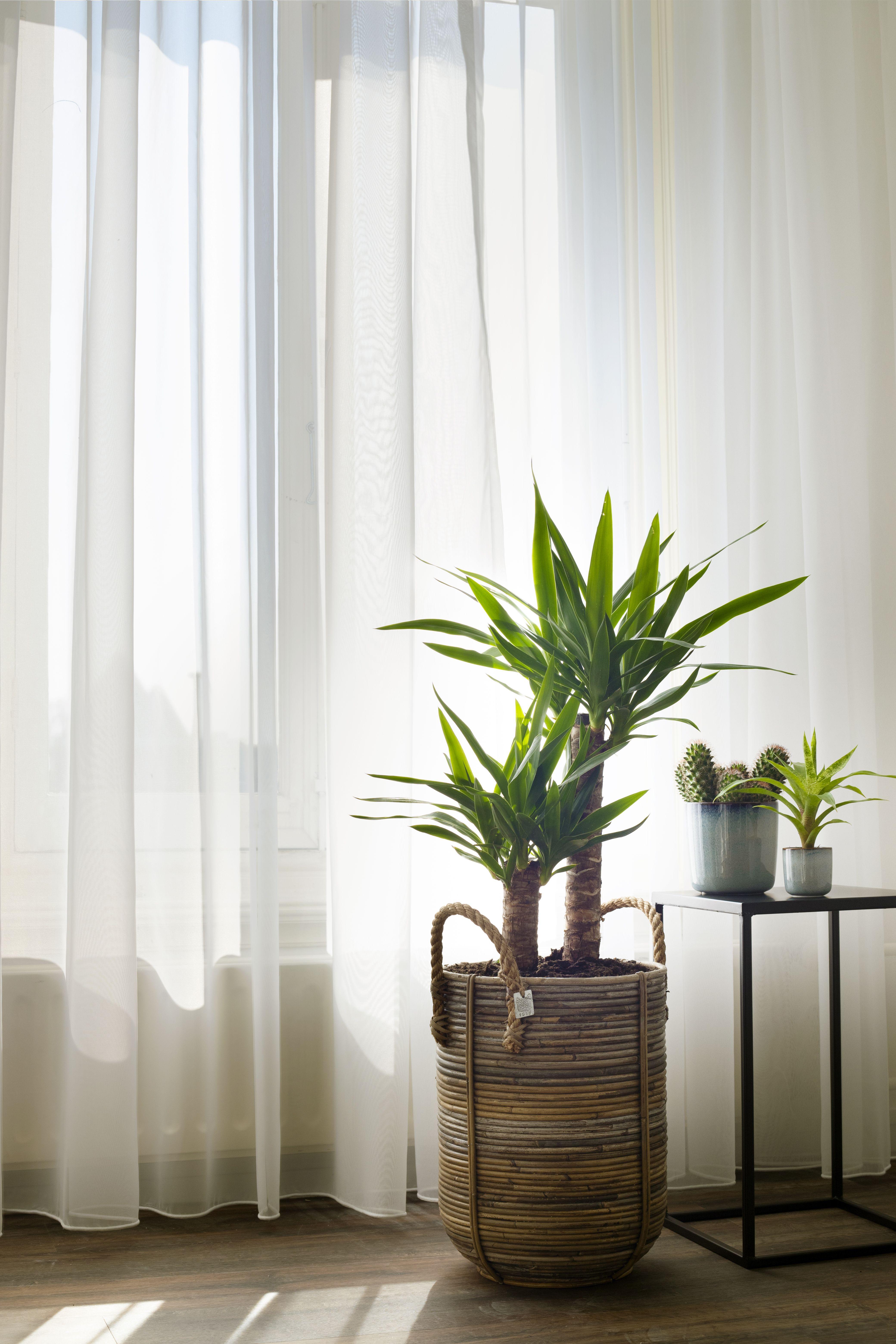 Je Gordijnen Zo Lang Mogelijk Mooi En Fris Houden Doe Je Zo Huis Ideeen Decoratie Slaapkamerideeen Huis Interieur