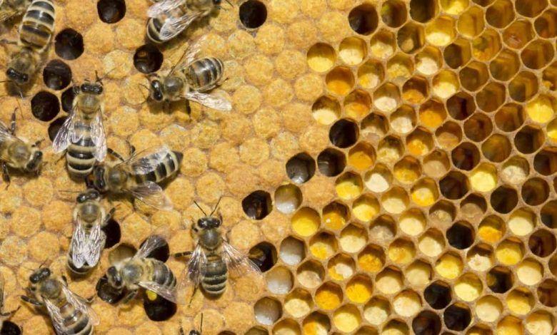 العسل الجورجي عمره 8000 عام وأقدم خلايا نحل عرفتها البشرية Black Peppercorn Peppercorn