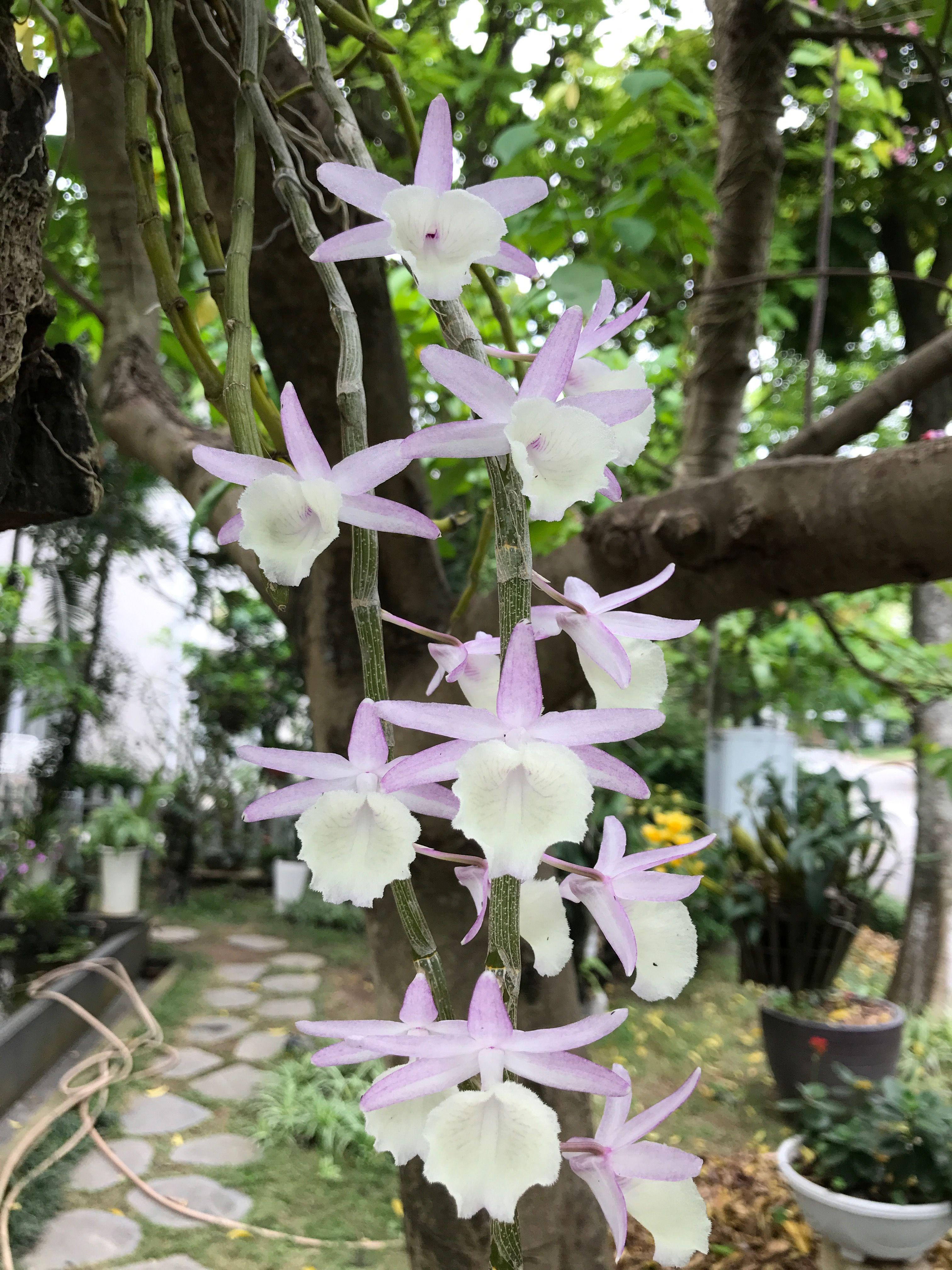 Pin by annguyen on orchid garden ideas pinterest orchids garden