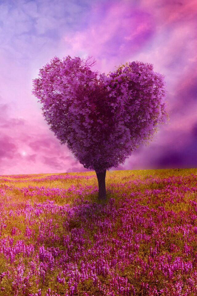 Purple Heart Shape Love Animation Wallpaper Heart In Nature Moonlight Photography