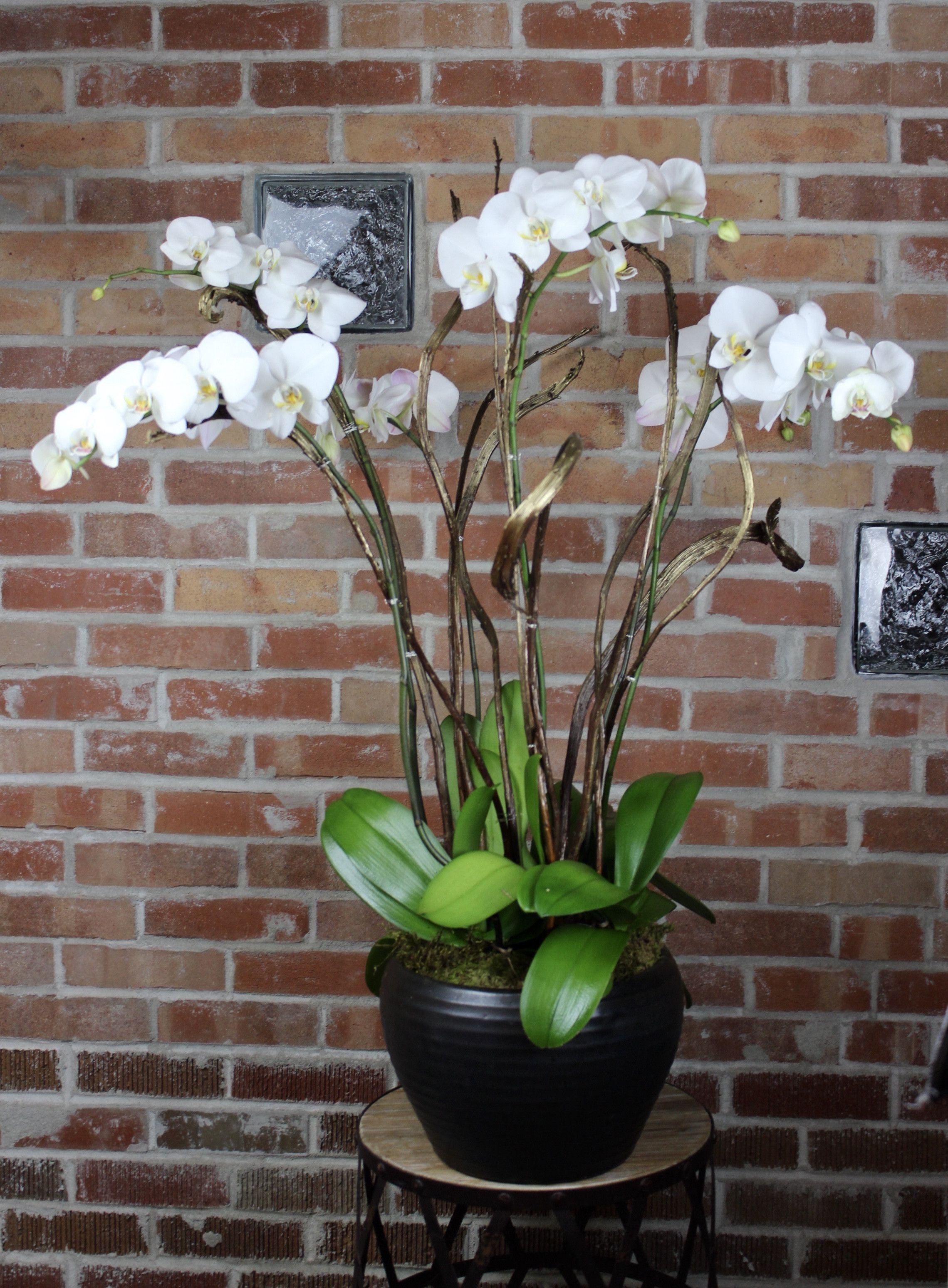 Gilded Age Orchid Garden Orchids garden, Flower delivery