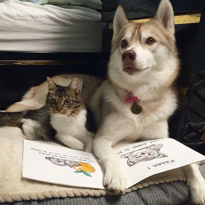 Трое в упряжке, не считая кота - «Вещи не такие, какими кажутся…»