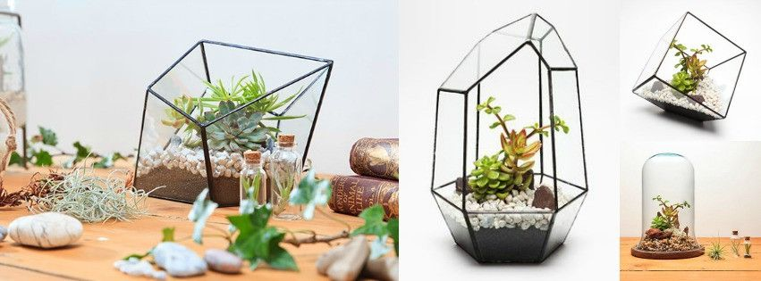 Terrariums Available At Moss Cottage Dundrum Dublin Www Moss Ie