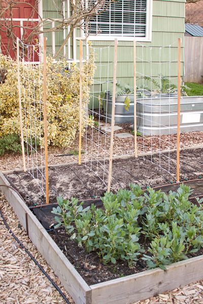 This pea trellis is so simple it is almost ridiculous that I am even