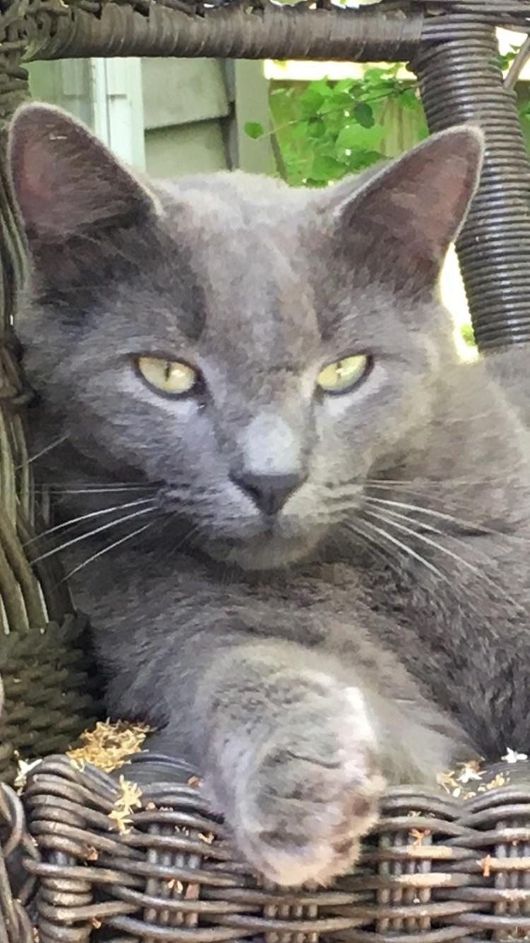 Lost Cat Male Covington, LA, USA 70433 Lost cat