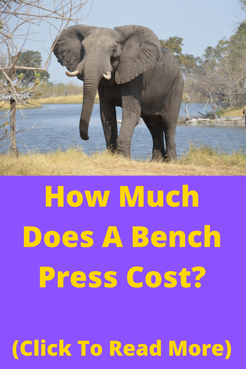 A Gym Bench Press How Much Does It Cost Whether You Are Starting A Home Gym Or Opening Up A Brand New Gym You Need To Know The Ov In 2020 With
