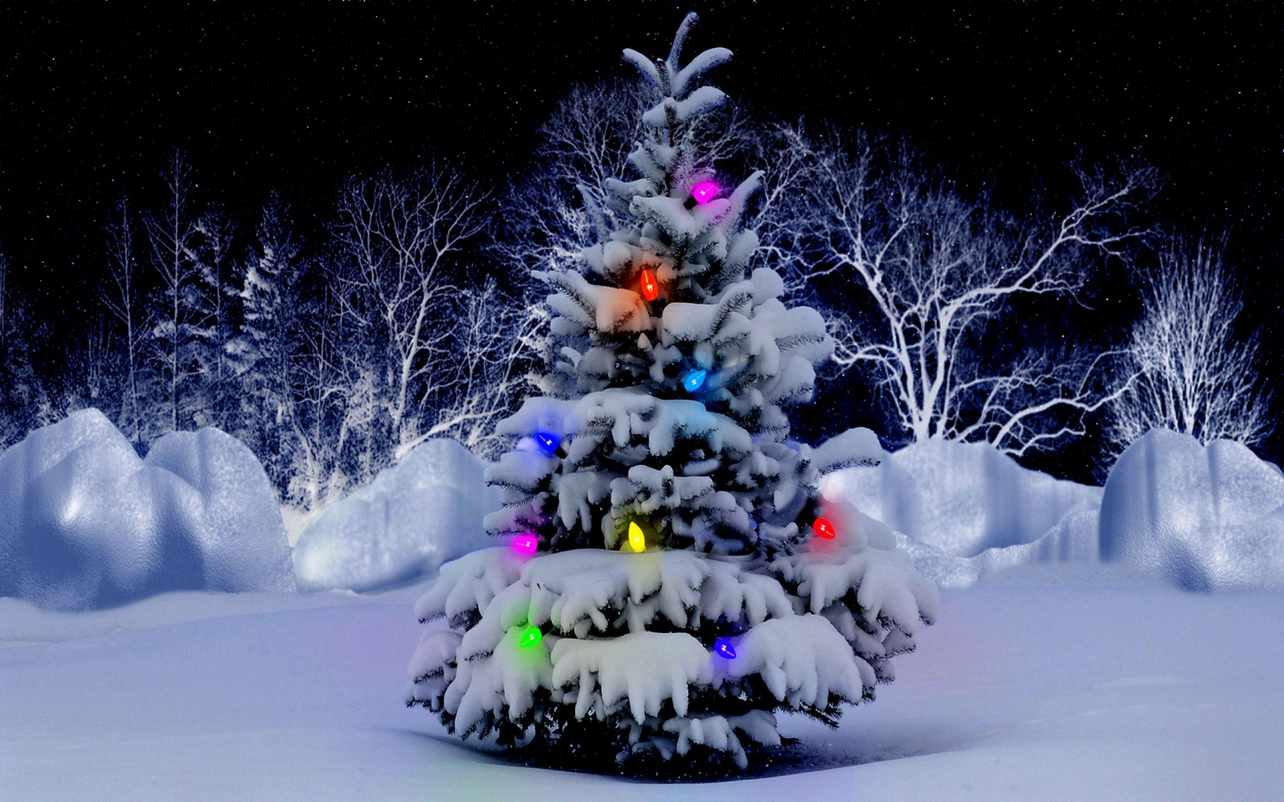 Image result for christmas tree outside with lights