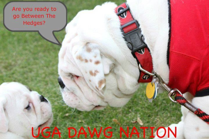 Are You Ready To Go Between The Hedges Bulldog Pets Cute