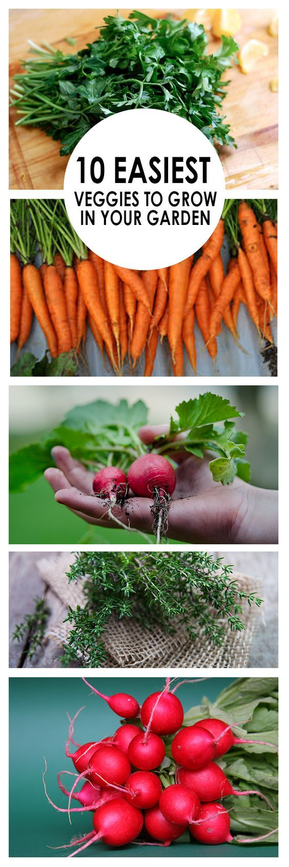 10 easiest veggies to grow in your garden gardening for Indoor vegetable gardening tips