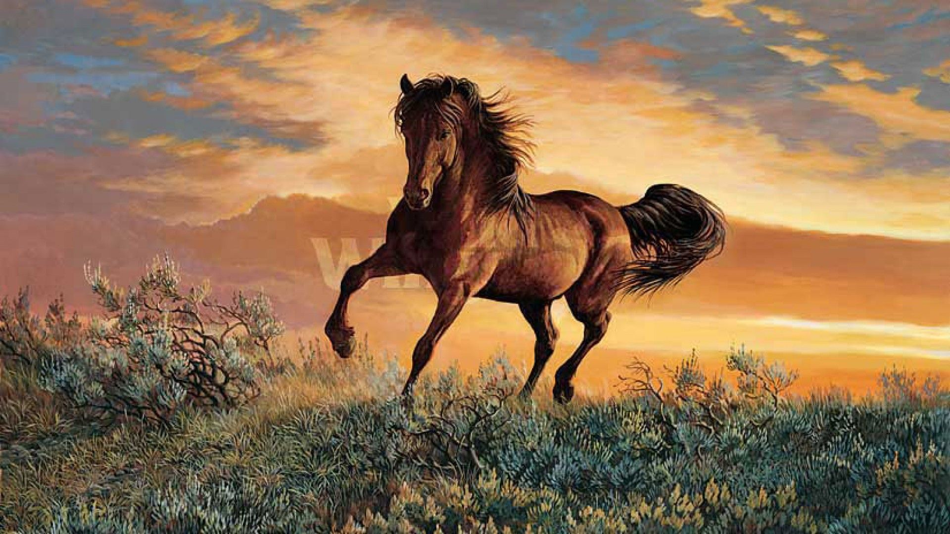 Beautiful Wallpaper Horse National Geographic - 72bc28555ec3a518ce30f152872c7850  Picture_206632.jpg