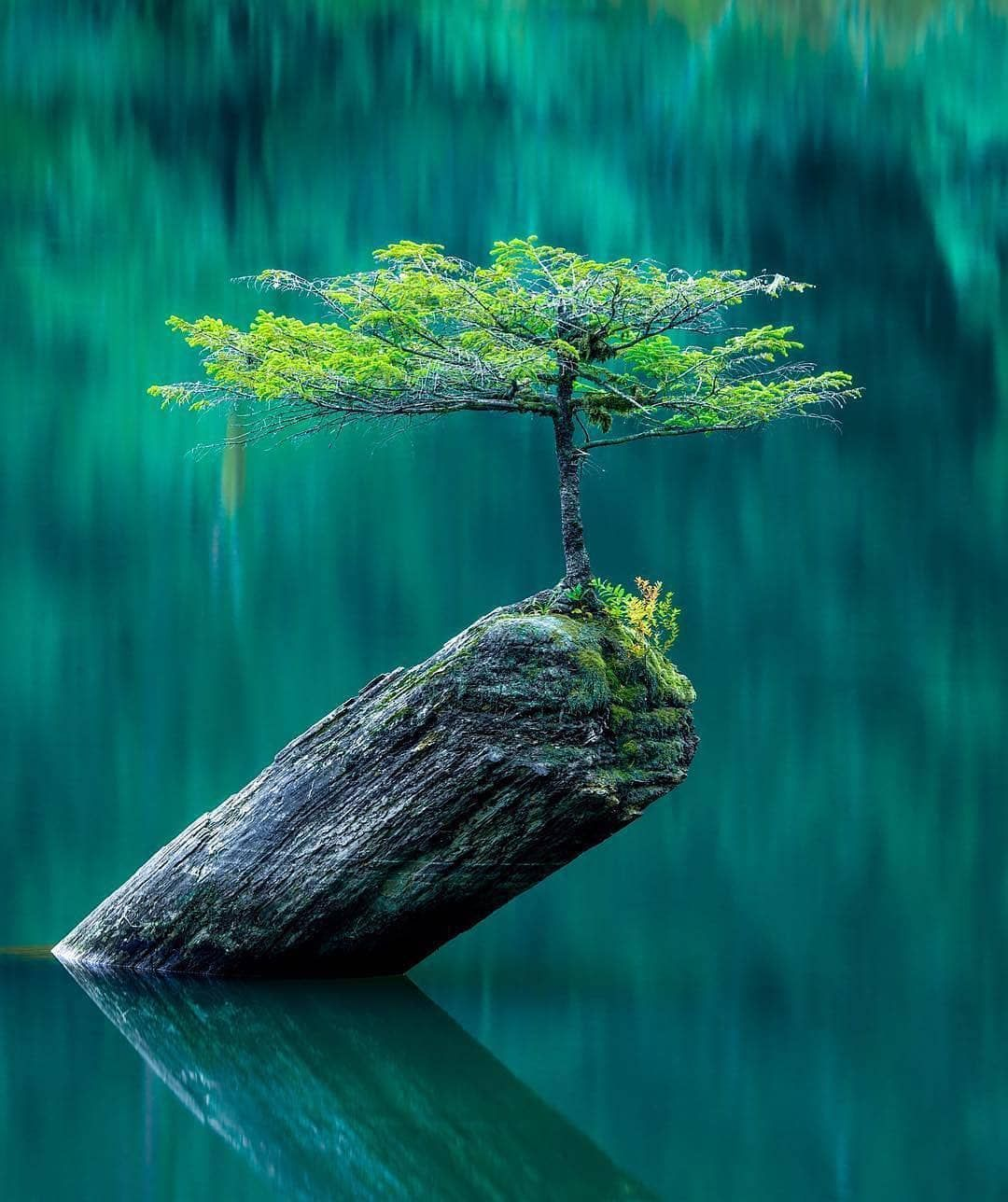 Survivor A Lonely Tree Reflecting Perfectly Into Fairy Lake Survivor A Lonely Tree Reflecting Beautiful Photography Nature Nature Photography Nature Photos