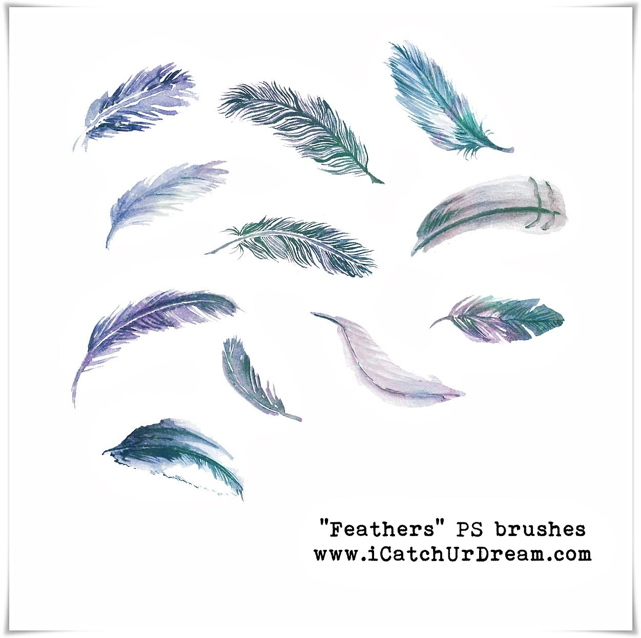 Feathers Ps Brushes By Icatchurdream Deviantart Com On Deviantart