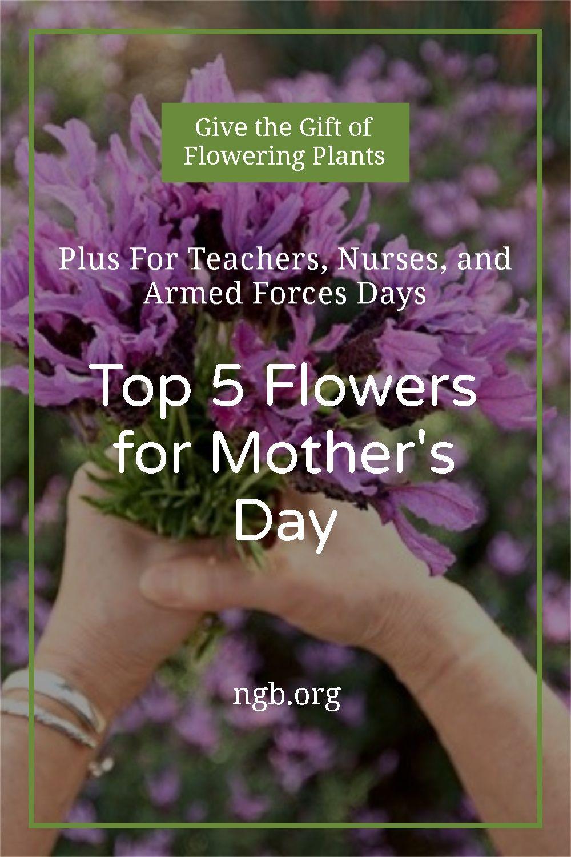 900 Flower Garden Ideas In 2021 Flower Garden Garden Plants