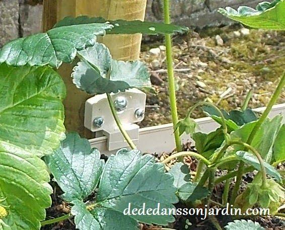 comment faire pousser des fraises en hauteur d d dans son jardin astuce jardinage. Black Bedroom Furniture Sets. Home Design Ideas
