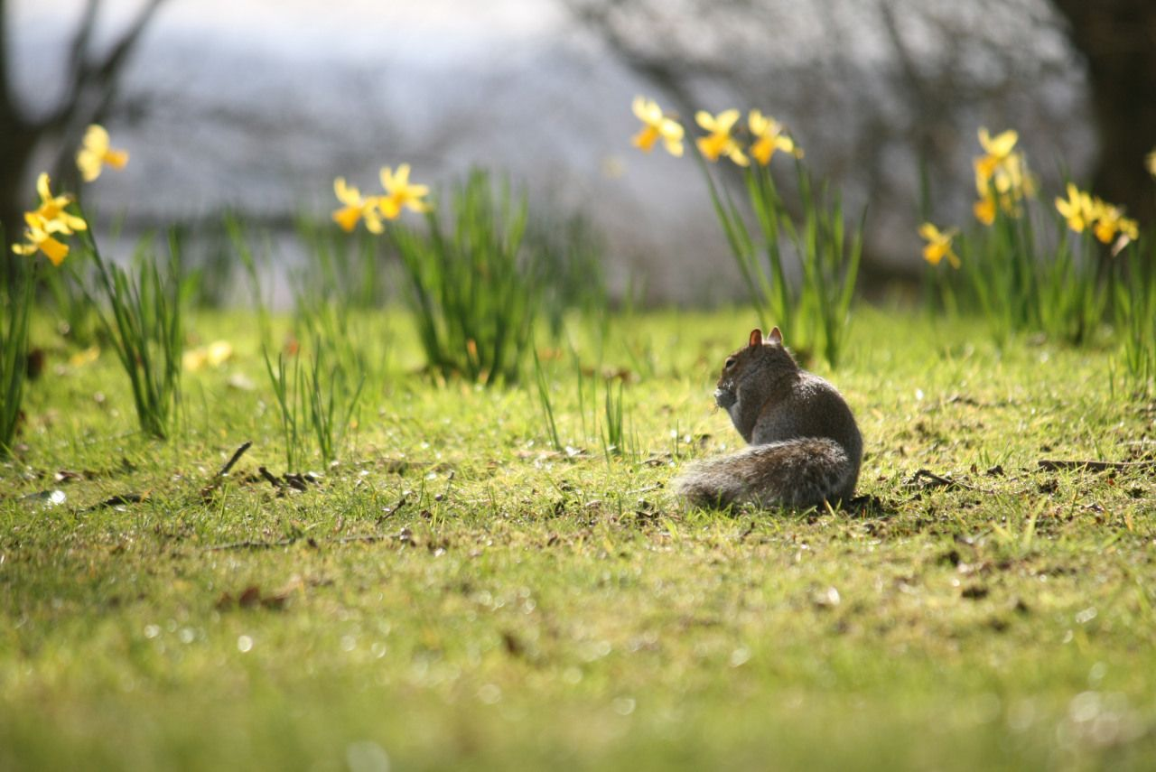 It's Spring time! #squirrels #pembroke_lodge #jaf_in_the_box