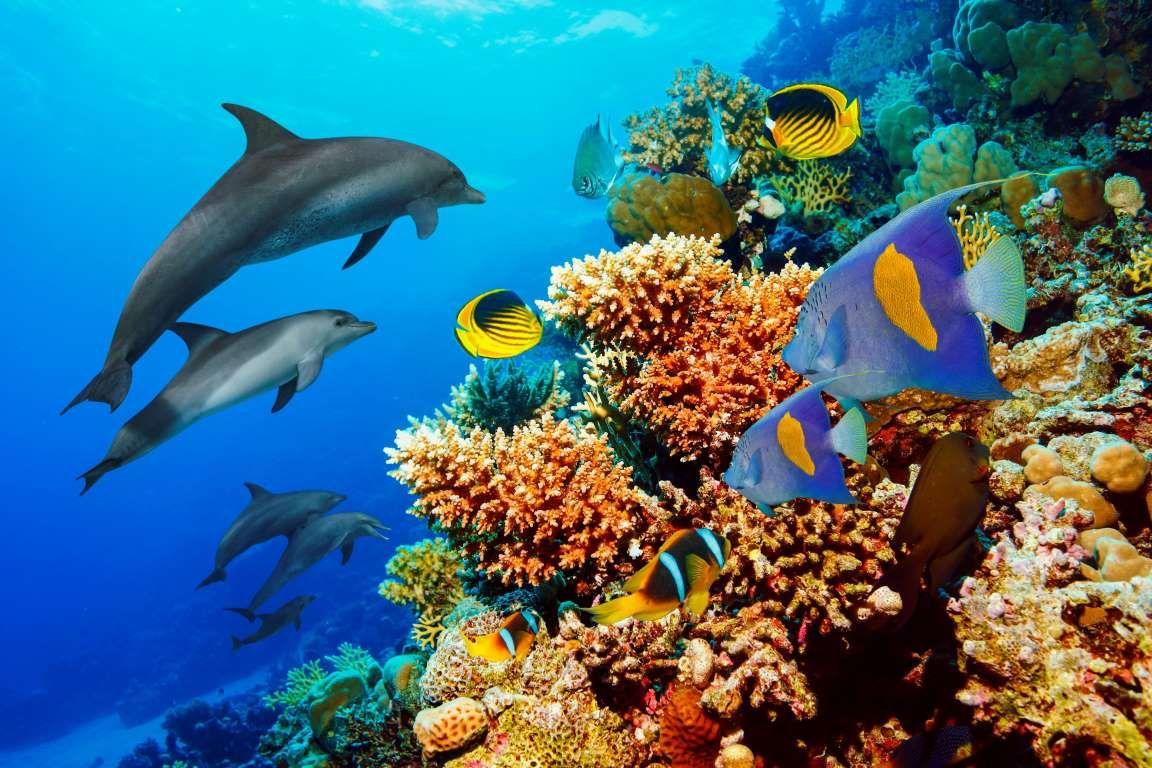 Por Tanto Es Importante Cuidar Y Preservar Estas Impresionantes Bellezas Naturales La Realidad Es Arrecifes De Coral Delfines En El Mar Imágenes De Delfines
