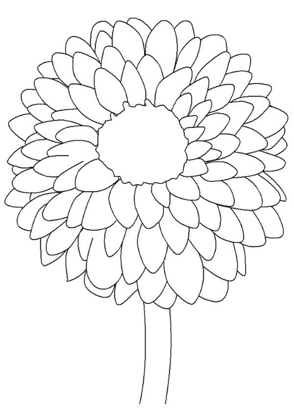 Flower Page Printable Coloring Sheets Dahlia Coloring Page For