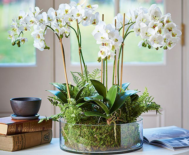 Orchid And Fern Garden Bloom Artificial Flowers Orchid Flower Arrangements Artificial Orchids Artificial Flower Arrangements