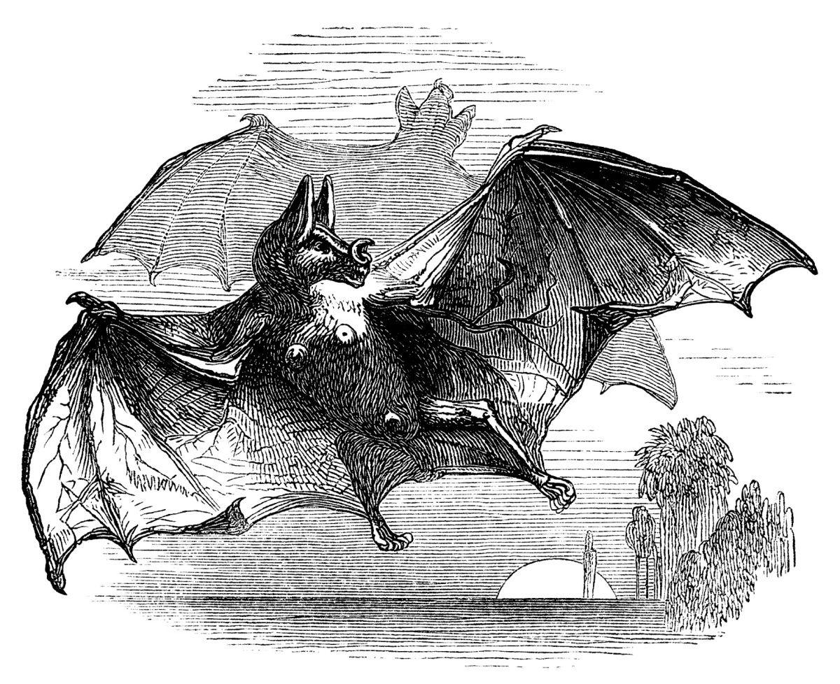 Vampire Bat Free Vintage Clip Art