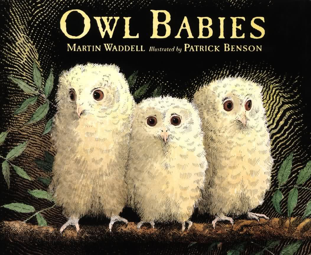 owl babies great children u0027s book about three owlet siblings