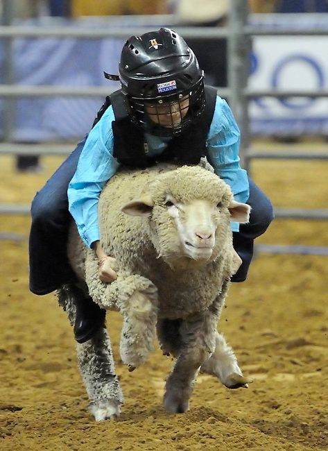 rodeo events mutton bustin