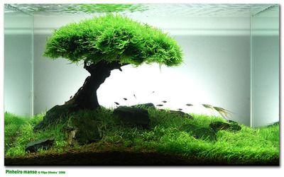 Java Moss And Dwarf Hair Grass Make A Great Home Enviroment Your Betta Aquascape Fish Tank Aquarium