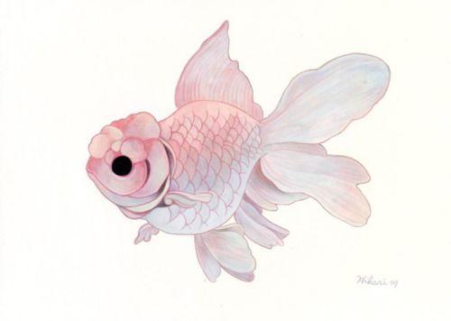 Art water underwater nature fish hibari japanese art for Pink koi fish