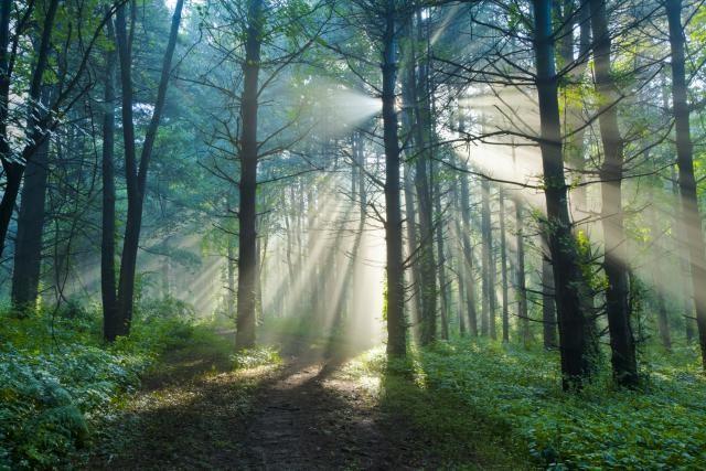 Baum Mit Pflanzenblättern Und Sonne Im Berg Stock Vektor Art und mehr  Bilder von Abenteuer - iStock