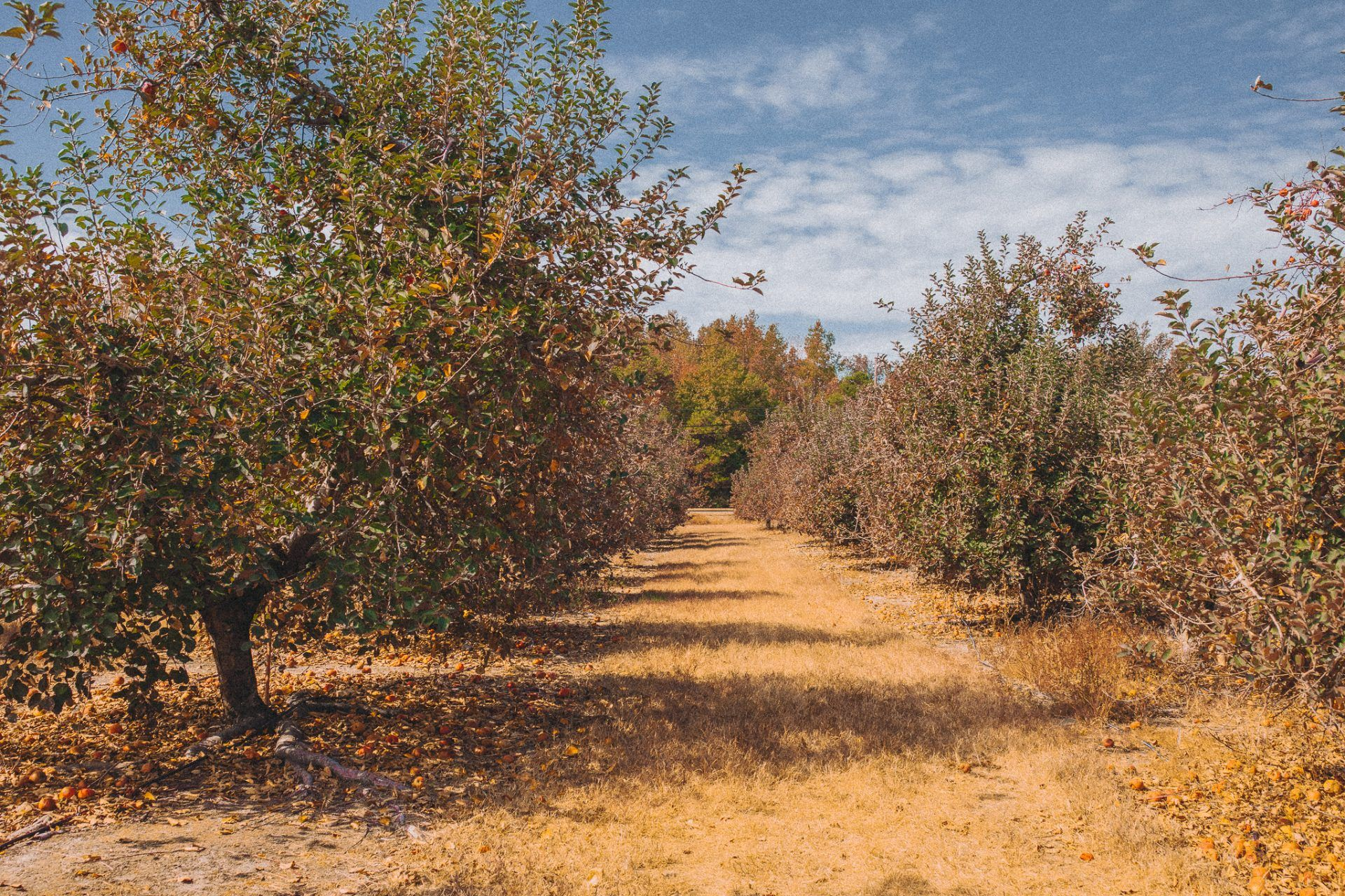 Windy Hill Apple Orchard 🍎 + Some Good News Update News
