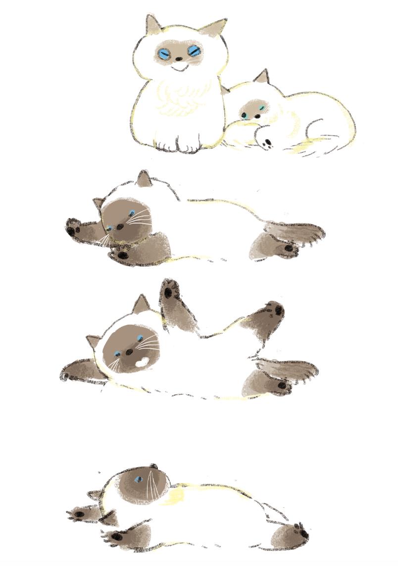 シャム猫寝返り イラスト4 Illustration と Cats