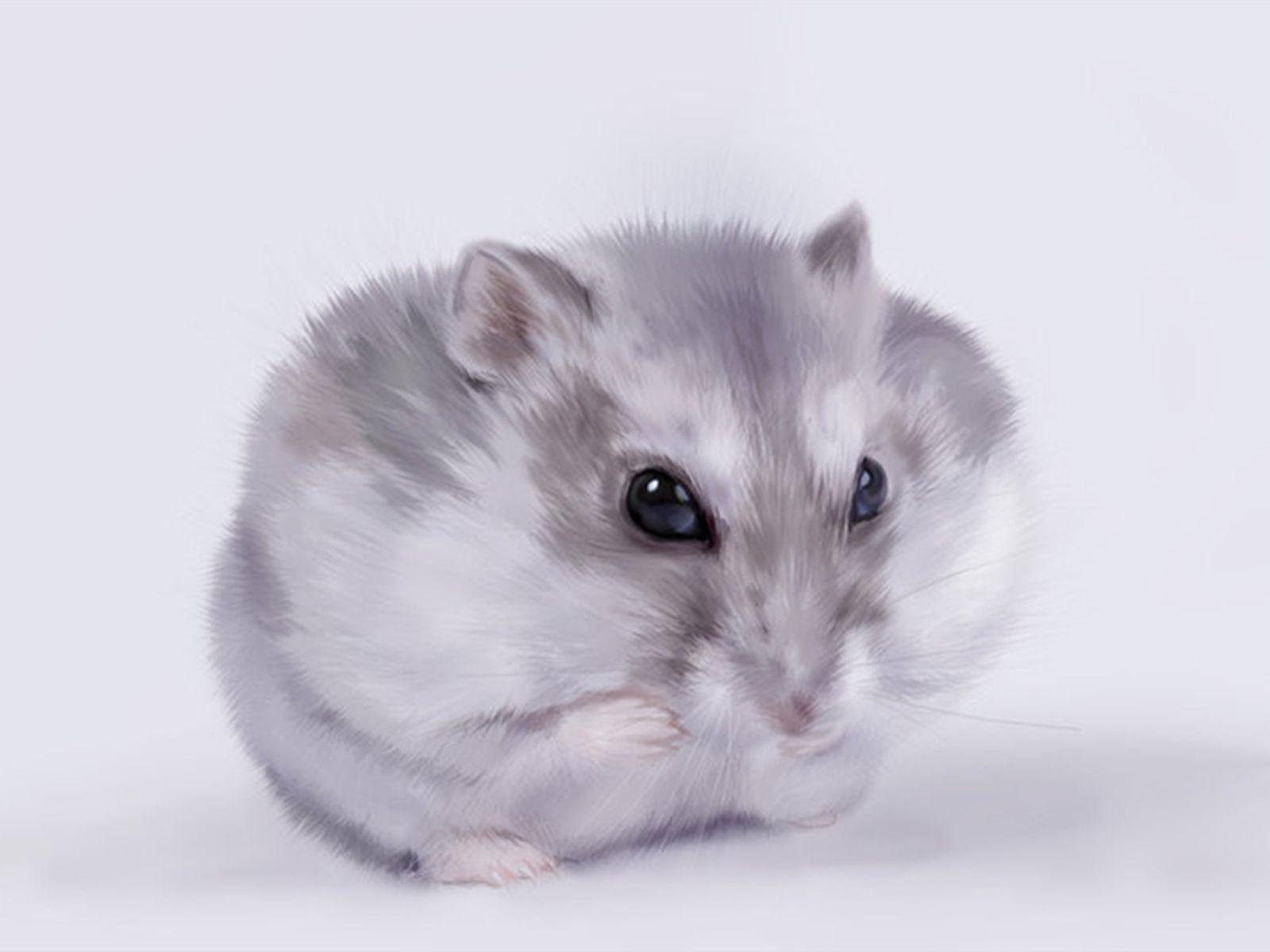 Cute Hamster Wallpaper Animal Wallpapers Hamster Wallpaper Cute Hamsters Dwarf Hamster Care