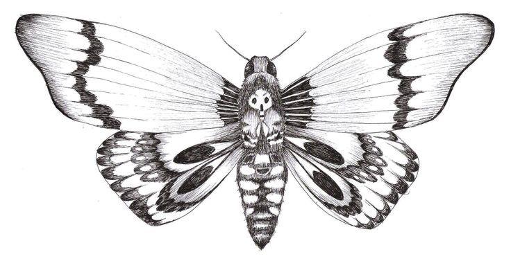 Papillon Nuit Dessin Recherche Google Tattoos Pinterest