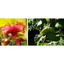 Bienenweiden & bienenfreundliche Pflanzen