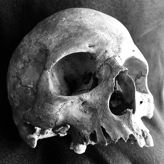 Skullic — SKULL PHOTOGRAPHY - Credit to:...
