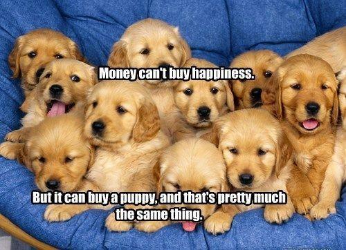 Golden Retriever Puppies Retriever Puppy Puppies Golden Retriever