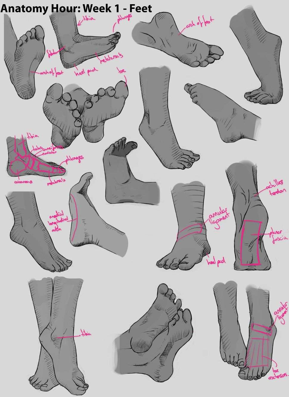 anatomy drawing practice - Google Search | Sketching | Pinterest ...