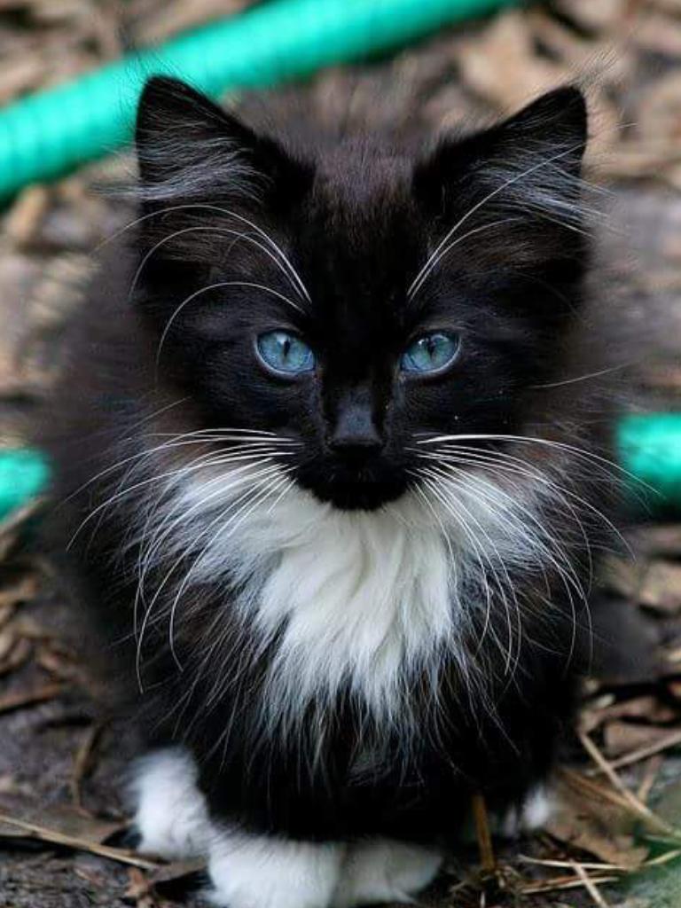 awww! he's so cute! those beautiful blue eyes love his