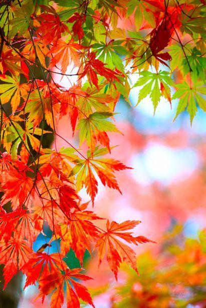 Pin By Cheryl Gorske On Autumnal In 2020 Beautiful Nature Wallpaper Beautiful Landscape Wallpaper Beautiful Nature