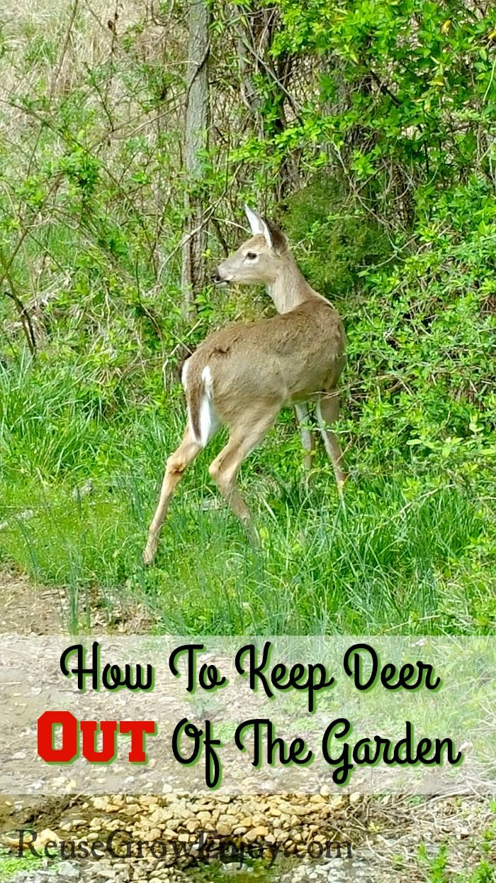 Having trouble with deer in your garden Check tips on How To Keep