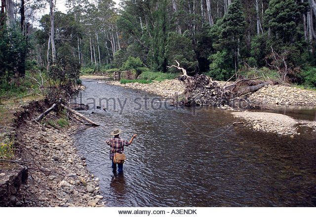 Fly fishing for trout Howqua River near Merrijig Victorian Alps NE