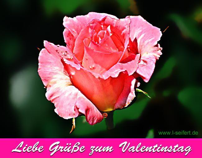 Gute Besserung, Liebe Grüße, Guten Morgen, Valentinstag, Nacht, Bilder,  Valentinstag Liebe, Love Greetings, Good Morning